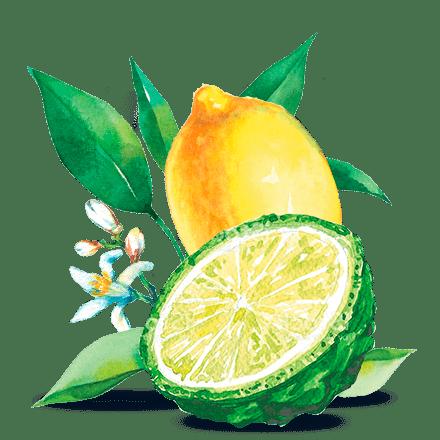 Mamie Nova - Ingrédient Fleur de Yaourt Citron Thé Noir Bergamote
