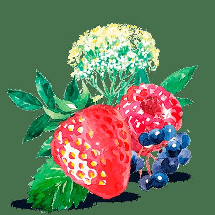 Mamie Nova - Ingrédient Fleur de Yaourt Fruits Rouges Fleur de Sureau
